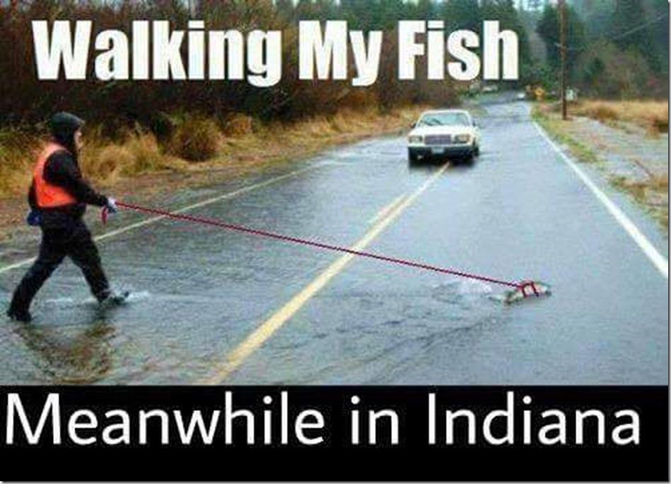 Indianafish